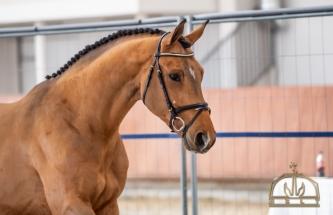 Comero mslt stallion20 MS0_1659
